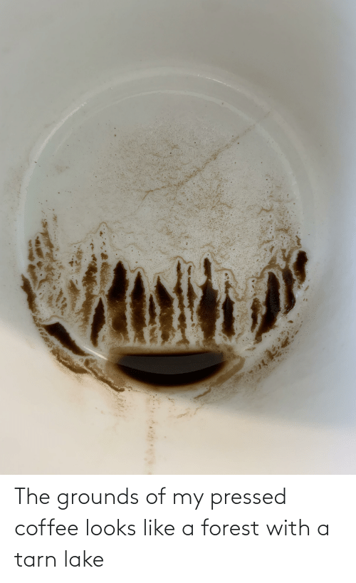 Pressed: The grounds of my pressed coffee looks like a forest with a tarn lake