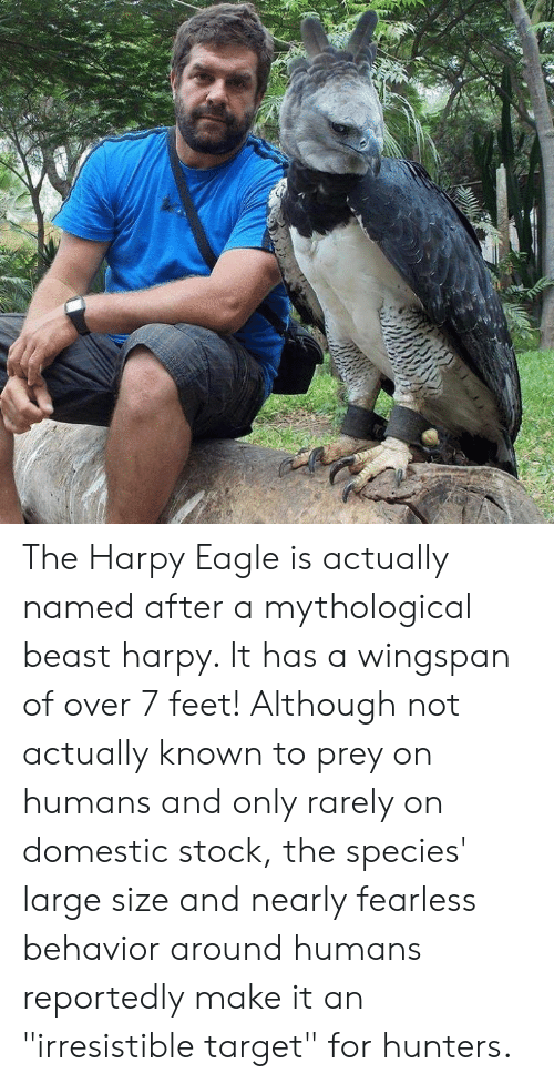 "fearless: The Harpy Eagle is actually named after a mythological beast harpy. It has a wingspan of over 7 feet! Although not actually known to prey on humans and only rarely on domestic stock, the species' large size and nearly fearless behavior around humans reportedly make it an ""irresistible target"" for hunters."