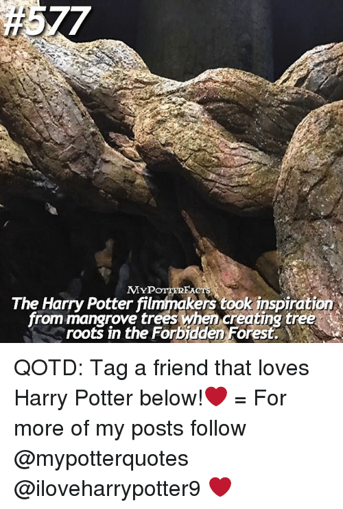Harry Potter, Memes, and Inspiration: The Harry Potter filmmakers took inspiration  from mangrove when creating roots in the Forbidden Forest. QOTD: Tag a friend that loves Harry Potter below!❤️ = For more of my posts follow @mypotterquotes @iloveharrypotter9 ❤️