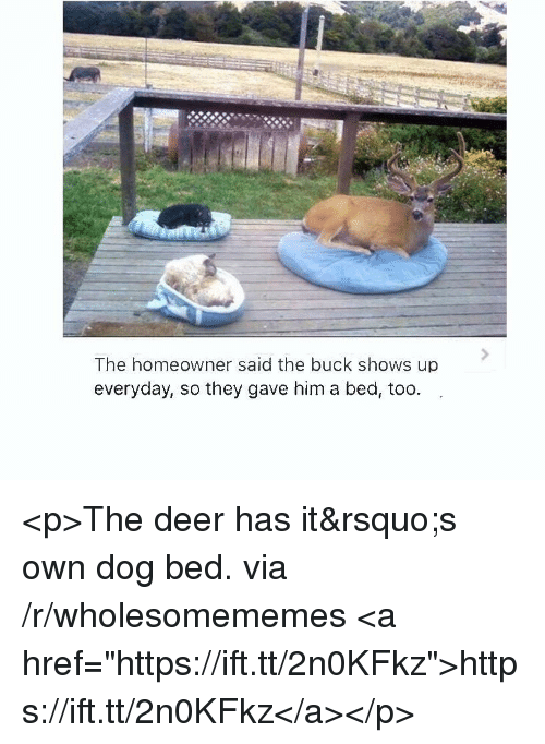 """dog bed: The homeowner said the buck shows up  everyday, so they gave him a bed, too. <p>The deer has it&rsquo;s own dog bed. via /r/wholesomememes <a href=""""https://ift.tt/2n0KFkz"""">https://ift.tt/2n0KFkz</a></p>"""