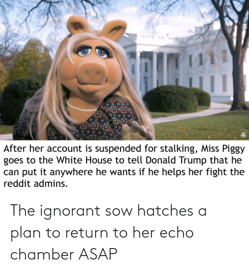 ignorant: The ignorant sow hatches a plan to return to her echo chamber ASAP