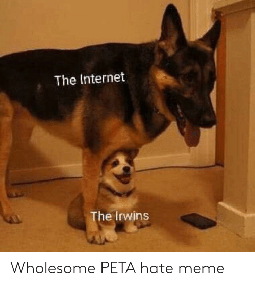 Hate Meme: The Internet  The Irwins Wholesome PETA hate meme