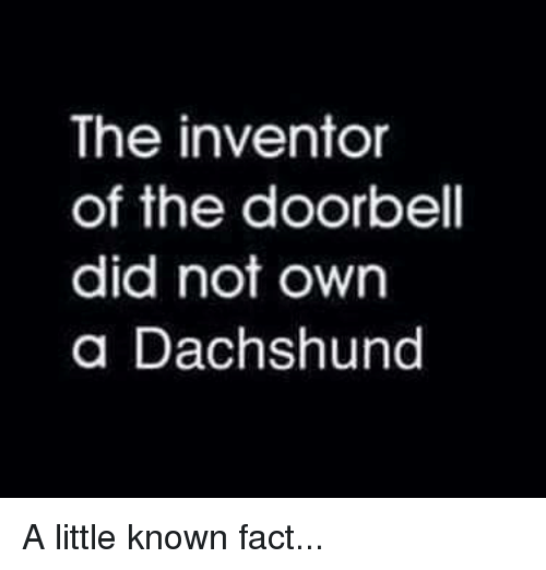 Memes, 🤖, and Dachshund: The inventor  of the doorbell  did not own  a Dachshund A little known fact...