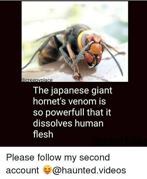 Memes, Videos, and Giant: The japanese giant  hornet's venom is  so powerfull that it  dissolves human  flesh Please follow my second account 😝@haunted.videos