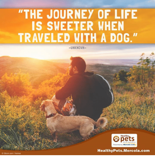 "memes: ""THE JOURNEY OF LIFE  IS SWEETER WHEN  TRAVELED WITH A DOG.""  UNKNOWN  Healthy  Mercola.com  Healthy Pets Mercola.com  OjStock com/Kerkez"