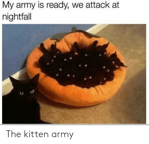 Army: The kitten army
