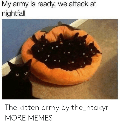 Army: The kitten army by the_ntakyr MORE MEMES