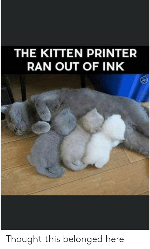 kitten: THE KITTEN PRINTER  RAN OUT OF INK Thought this belonged here