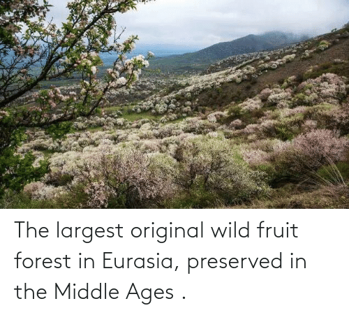 middle ages: The largest original wild fruit forest in Eurasia, preserved in the Middle Ages .