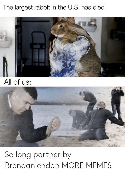 Largest: The largest rabbit in the U.S. has died  All of us: So long partner by Brendanlendan MORE MEMES