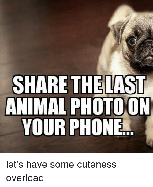 Dank, Phone, and Animal: THE LAST  ANIMAL PHOTOON  SHARE  YOUR PHONE let's have some cuteness overload