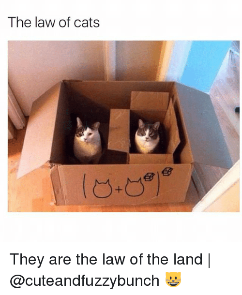 egs: The law of cats  eg  eg They are the law of the land   @cuteandfuzzybunch 😺