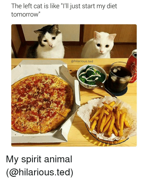 "Cats, Dieting, and Funny: The left cat is like ""l'll just start my diet  tomorrow""  @hilarious ted My spirit animal (@hilarious.ted)"