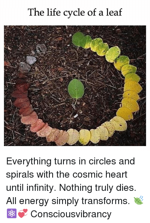 spirals: The life cycle of a leaf Everything turns in circles and spirals with the cosmic heart until infinity. Nothing truly dies. All energy simply transforms. 🍃⚛️💞 Consciousvibrancy