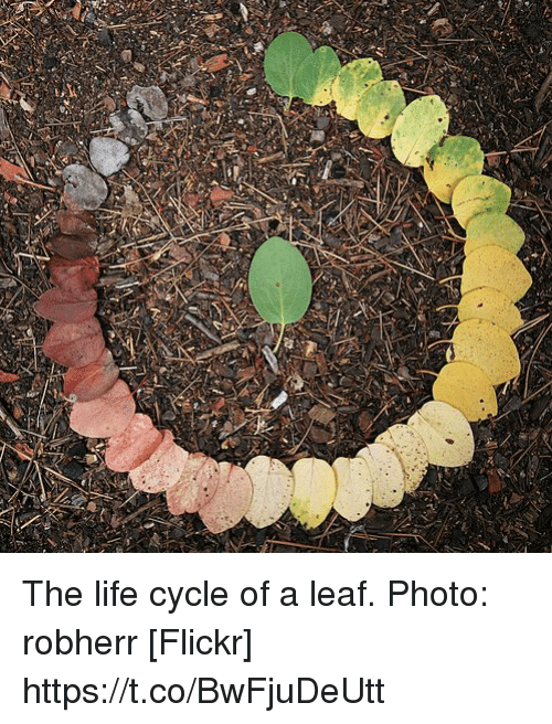 Life, Flickr, and Leaf: The life cycle of a leaf. Photo: robherr [Flickr] https://t.co/BwFjuDeUtt