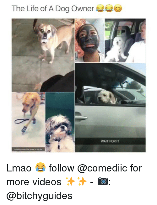 Life, Lmao, and Memes: The Life of A Dog Owner  WAIT FOR IT Lmao 😂 follow @comediic for more videos ✨✨ - 📷: @bitchyguides