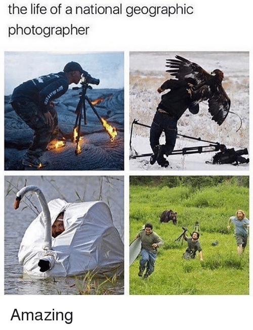 Life, Memes, and National Geographic: the life of a national geographic  photographer Amazing