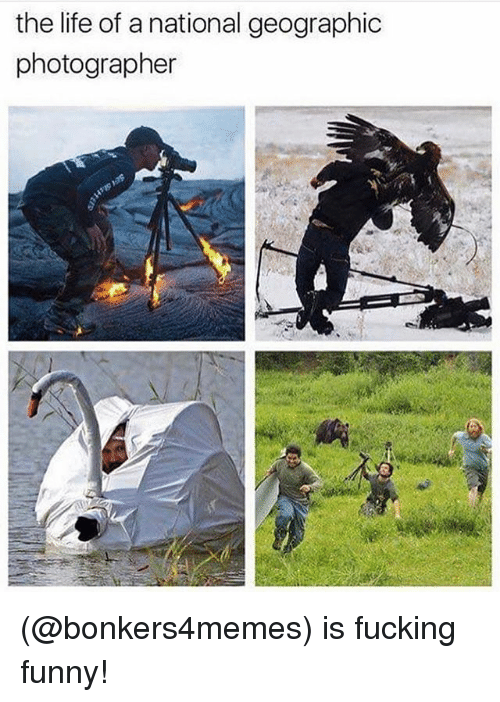 Fucking, Funny, and Life: the life of a national geographic  photographer (@bonkers4memes) is fucking funny!