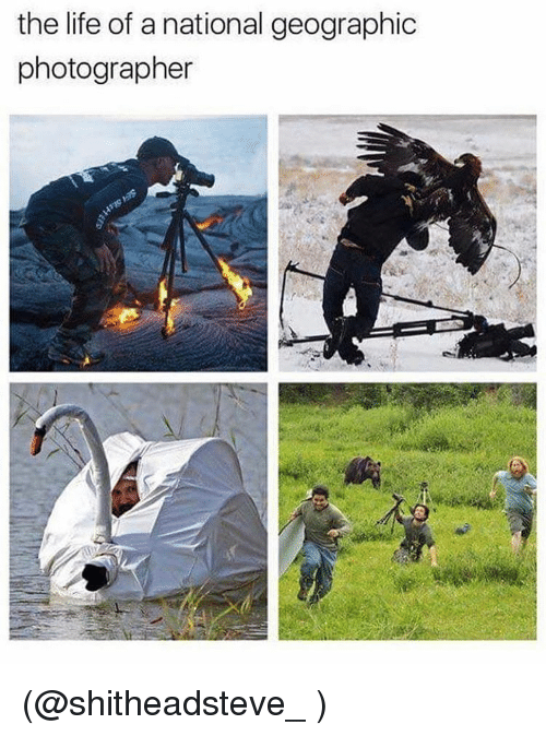 Funny, Meme, and  Photographer: the life of a national geographic  photographer (@shitheadsteve_ )