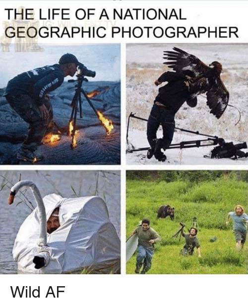 Af, Life, and Memes: THE LIFE OF ANATIONAL  GEOGRAPHIC PHOTOGRAPHER Wild AF