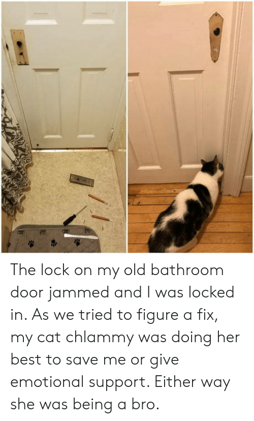 We Tried: The lock on my old bathroom door jammed and I was locked in. As we tried to figure a fix, my cat chlammy was doing her best to save me or give emotional support. Either way she was being a bro.
