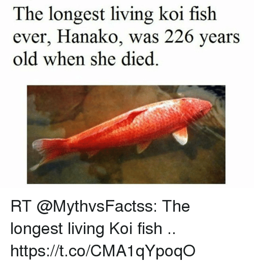The longest living koi fish ever hanako was 226 years old for Longest living fish