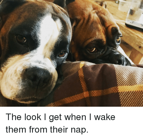 Annoying, Them, and Wake: The look I get when I wake them from their nap.