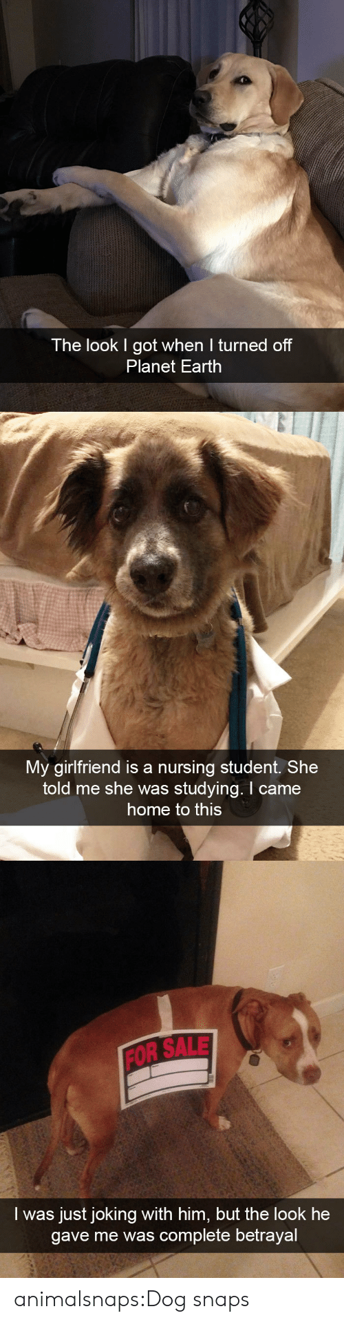betrayal: The look I got when I turned off  Planet Earth   My girlfriend is a nursing student. She  told me she was studying. I came  home to this   FOR SALE  I was just joking with him, but the look he  gave me was complete betrayal animalsnaps:Dog snaps