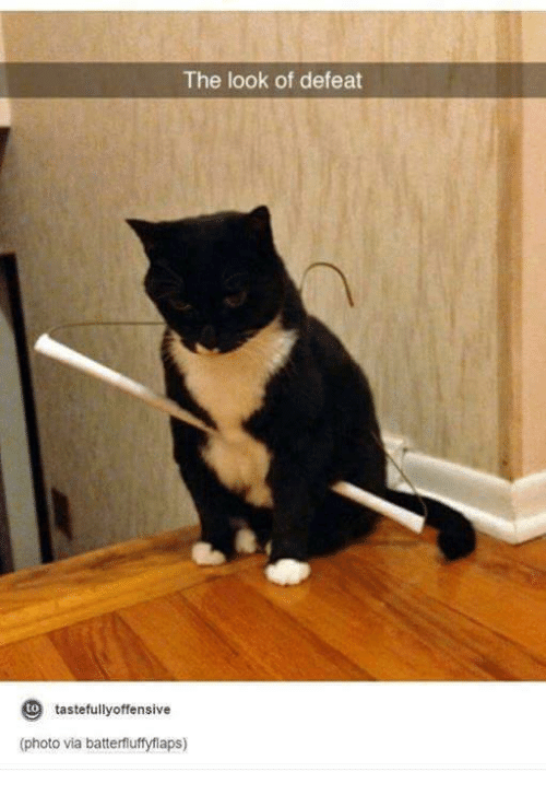Offensives: The look of defeat  to  tastefully offensive  (photo via batterfluffyflaps)
