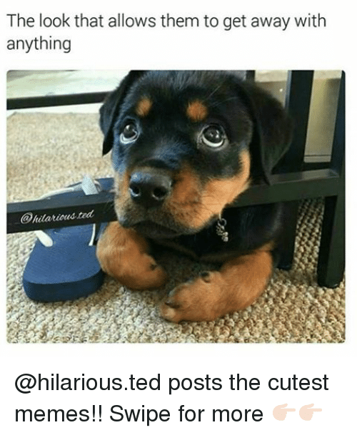 Memes, 🤖, and The Look: The look that allows them to get away with  anything  sted  @hilariou @hilarious.ted posts the cutest memes!! Swipe for more 👉🏻👉🏻