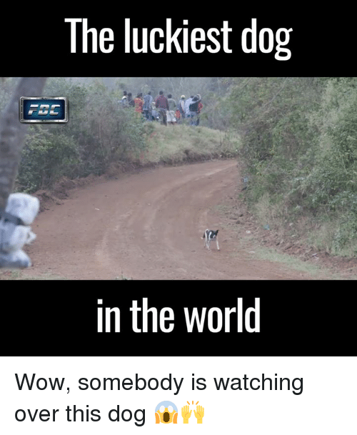 Dank, Dogs, and Wow: The luckiest dog  in the world Wow, somebody is watching over this dog 😱🙌