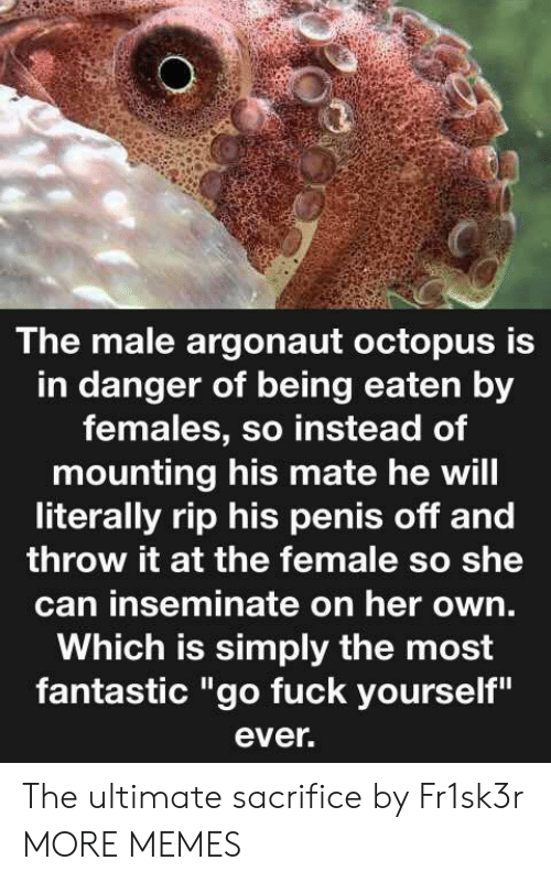 """Octopus: The male argonaut octopus is  in danger of being eaten by  females, so instead of  mounting his mate he will  literally rip his penis off and  throw it at the female so she  can inseminate on her own.  Which is simply the most  fantastic """"go fuck yourself""""  ever. The ultimate sacrifice by Fr1sk3r MORE MEMES"""