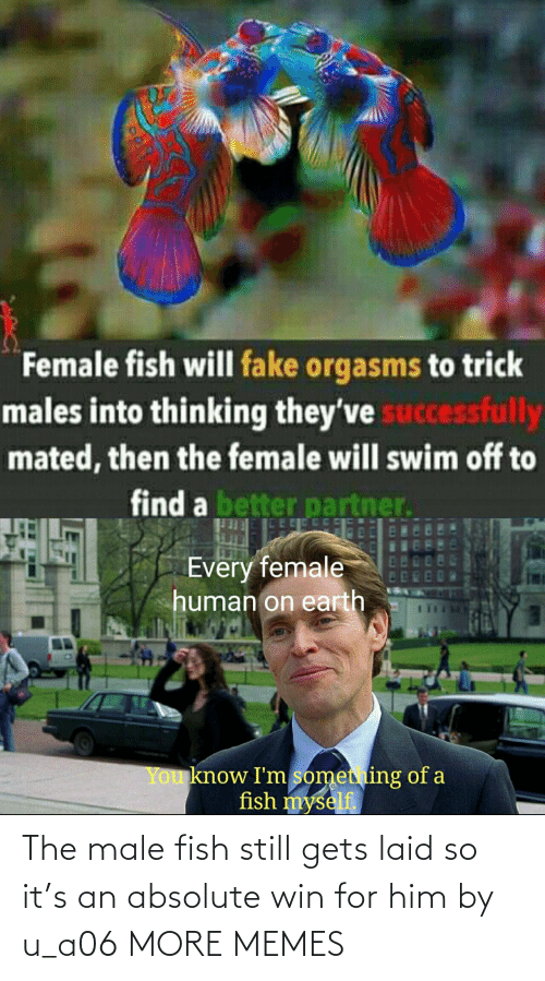 Fish: The male fish still gets laid so it's an absolute win for him by u_a06 MORE MEMES