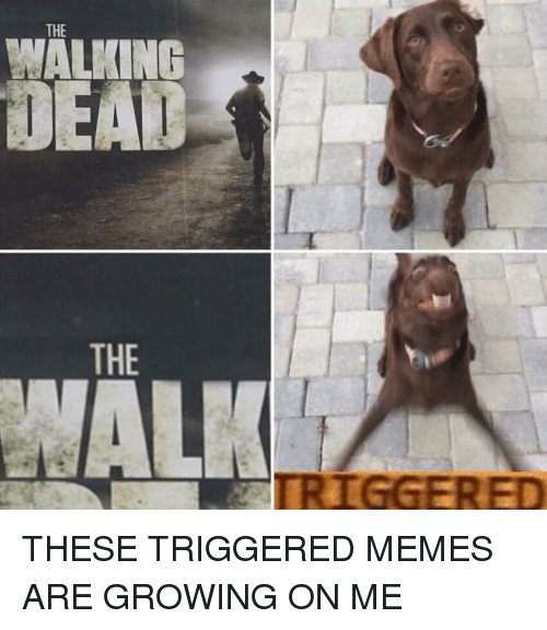 Trigger Meme: THE  MALPOING  EAD  THE THESE TRIGGERED MEMES ARE GROWING ON ME