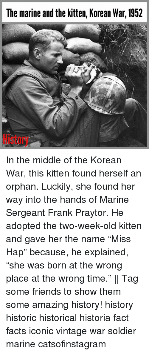 """Facts, Friends, and Memes: The marine and the kitten, Korean War, 1952 In the middle of the Korean War, this kitten found herself an orphan. Luckily, she found her way into the hands of Marine Sergeant Frank Praytor. He adopted the two-week-old kitten and gave her the name """"Miss Hap"""" because, he explained, """"she was born at the wrong place at the wrong time."""" 