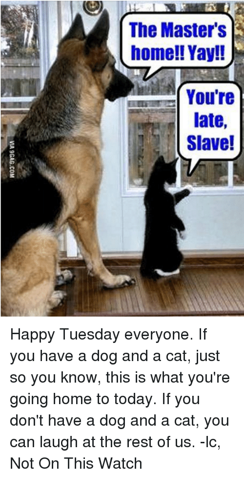 The master 39 s home yay you 39 re late slave happy tuesday for Cat toys for when you re not home