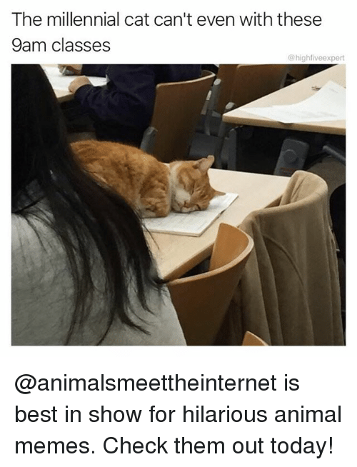 Memes, Animal, and Best: The millennial cat can't even with these  9am classes  @highfiveexpert @animalsmeettheinternet is best in show for hilarious animal memes. Check them out today!