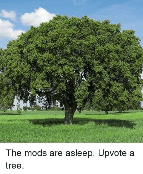 Tree, Mods, and Mods Are Asleep