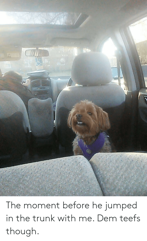 Teefs: The moment before he jumped in the trunk with me. Dem teefs though.
