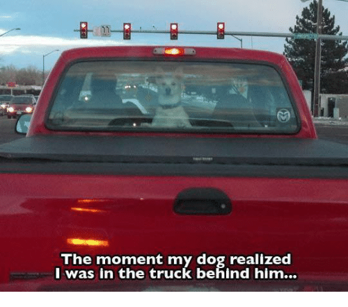 memes: The moment my dog realized  I was in the truck behind him...