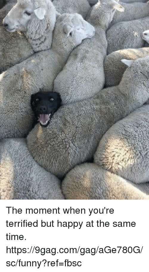 9gag, Dank, and Funny: The moment when you're terrified but happy at the same time.  https://9gag.com/gag/aGe780G/sc/funny?ref=fbsc
