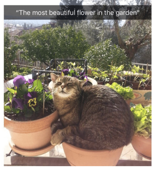 """Beautiful, Flower, and  Most Beautiful: """"The most beautiful flower in the garden""""  13"""