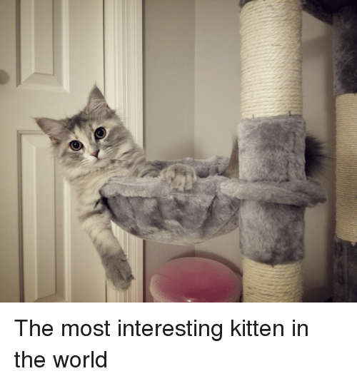 World, Kitten, and The World: The most interesting kitten in the world