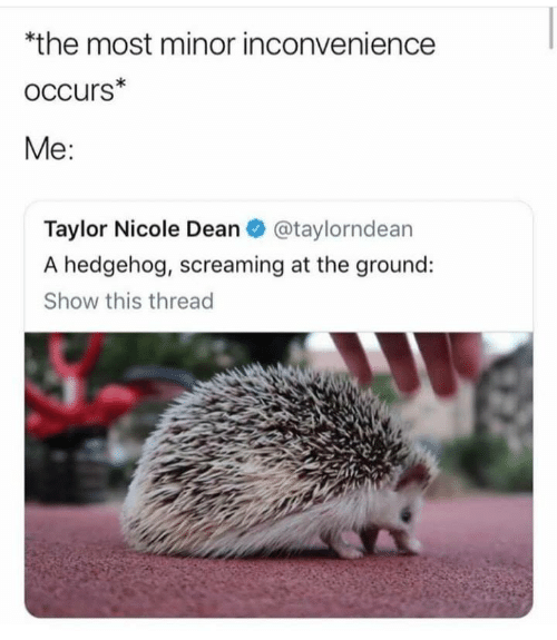 Hedgehog: *the most minor inconvenience  oCcurs*  Me:  Taylor Nicole Dean@taylorndean  A hedgehog, screaming at the ground:  Show this thread