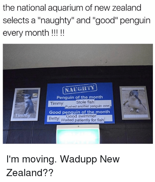 "Funny, Aquarium, and Fish: the national aquarium of new zealand  selects a ""naughty"" and ""good"" penguin  NAUGKTY  Penquin of the monthh  Stole fish  Pushed another penguin over  Timmy  Good penquin of the month  Timmy  Good swimmer  Betty waited patiently for fish I'm moving. Wadupp New Zealand??"