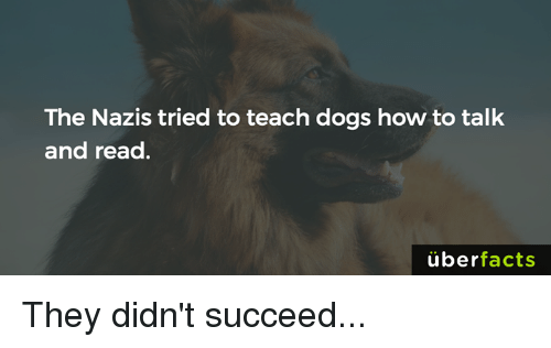 Uber Facts: The Nazis tried to teach dogs how to talk  and read.  uber  facts They didn't succeed...