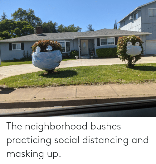 bushes: The neighborhood bushes practicing social distancing and masking up.