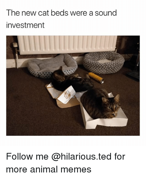 Funny, Memes, and Ted: The new cat beds were a sound  investment Follow me @hilarious.ted for more animal memes