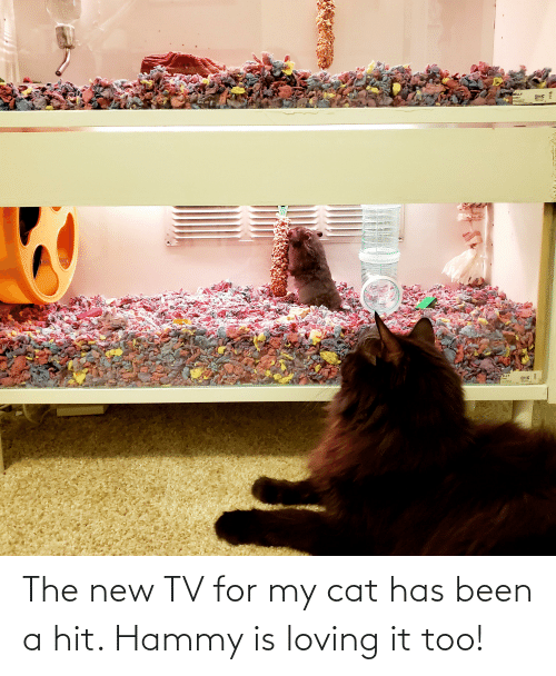 New Tv: The new TV for my cat has been a hit. Hammy is loving it too!