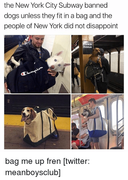 Dogs, Memes, and New York: the New York City Subway banned  dogs unless they fit in a bag and the  people of New York did not disappoint  ranklin  Avenue bag me up fren [twitter: meanboysclub]